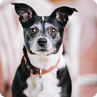 Adopt A Pet :: Carol - Portland, OR
