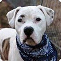 Adopt A Pet :: Stan-Adopted! - Turnersville, NJ