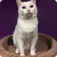 Adopt A Pet :: Adina (& Paddy) - Herndon, VA