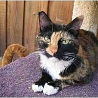 Adopt A Pet :: Olivia - Toluca Lake, CA