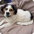 Adopt A Pet :: Iggy