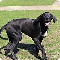 Adopt A Pet :: KIEFER - Salem, NH