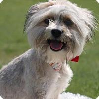 Adopt A Pet :: Jackson - Carrollton, TX