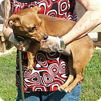 Adopt A Pet :: Coco - Livingston, TX