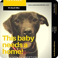 Adopt A Pet :: Genie - Des Moines, IA