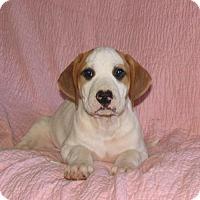 Adopt A Pet :: MARTY - Bronx, NY