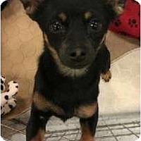 Adopt A Pet :: Greg - Phoenix, AZ