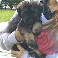 Adopt A Pet :: Betty bear - Miami, FL