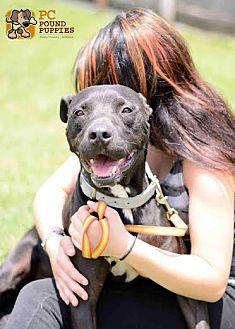 Terrier (Unknown Type, Medium)/Labrador Retriever Mix Dog for adoption in Mt. Vernon, Indiana - Tyrone