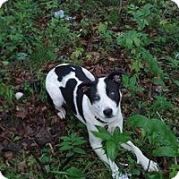 Adopt A Pet :: Jasmine - Warsaw, IN