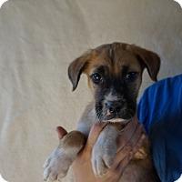 Adopt A Pet :: Scooter - Oviedo, FL