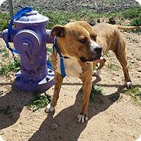 Adopt A Pet :: Tiger - California City, CA