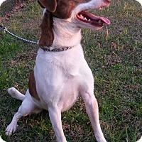 Adopt A Pet :: BINGO - ROCKMART, GA