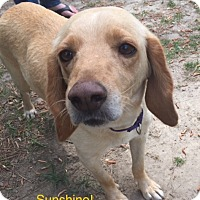 Adopt A Pet :: Sunshine - Jetersville, VA