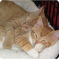 Adopt A Pet :: Morris - Port Republic, MD