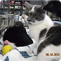 Adopt A Pet :: Ashley - Riverside, RI