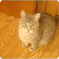 Adopt A Pet :: Pilar - Muncie, IN
