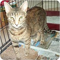Adopt A Pet :: Piano - Greenville, SC