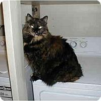 Adopt A Pet :: Lizzy - Toronto, ON