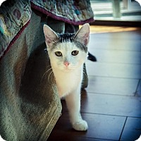 Adopt A Pet :: Cruz - Los Angeles, CA
