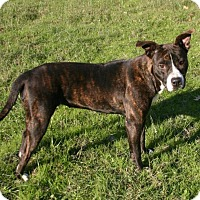 Adopt A Pet :: June Bug - Lufkin, TX
