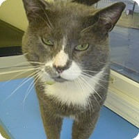 Adopt A Pet :: Dudley - Hamburg, NY