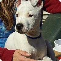 Adopt A Pet :: Blaze (15 lb) Video! - Twinsburg, OH