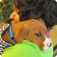 Adopt A Pet :: Delilah - Chesterfield, VA