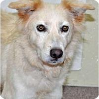 Adopt A Pet :: Lindy - Port Washington, NY