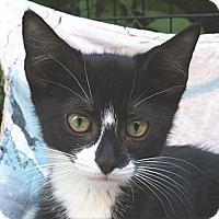 Adopt A Pet :: Viva - Brooklyn, NY