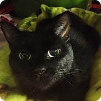 Adopt A Pet :: Gwennie - Byron Center, MI