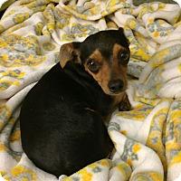 Adopt A Pet :: Tinker - Knoxville, TN