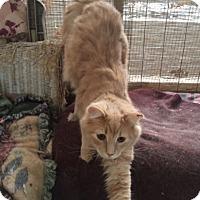 Adopt A Pet :: Mellow - Delmont, PA