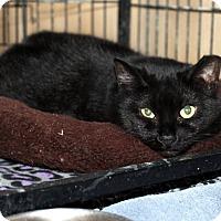 Adopt A Pet :: Caroline - Lowell, MA