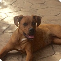Adopt A Pet :: Sheila - Alpharetta, GA