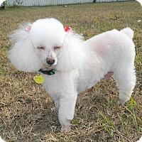 Adopt A Pet :: Cutie - Umatilla, FL