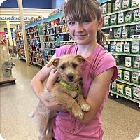 Adopt A Pet :: Sparky - Brea, CA