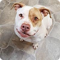 Adopt A Pet :: Dixie - Fennville, MI
