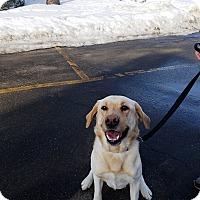 Adopt A Pet :: Ranger - Brunswick, ME