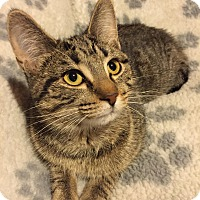 Adopt A Pet :: Mollie - Woodstock, ON