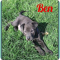 Adopt A Pet :: Ben - Fort Wayne, IN