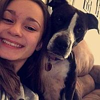 Adopt A Pet :: Phoenix - Corbin, KY