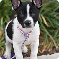 Adopt A Pet :: Branson - Frisco, TX