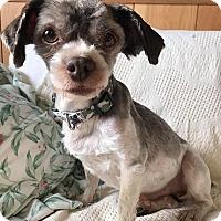 Adopt A Pet :: Magnum - Maryville, MO