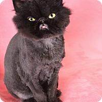 Adopt A Pet :: Mallory - Benton, LA