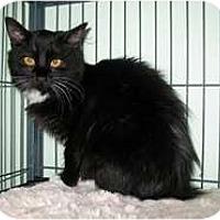 Adopt A Pet :: Crissy - Shelton, WA