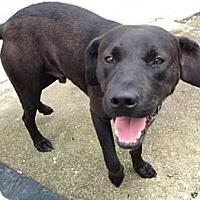 Adopt A Pet :: Jack - Richmond, VA