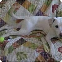 Adopt A Pet :: Hazel - Antioch, IL