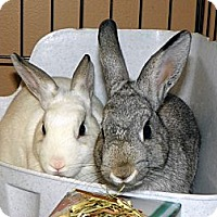 Adopt A Pet :: Gabby & Diana - North Gower, ON