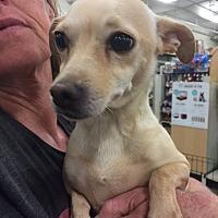 Adopt A Pet :: Alexis - Fresno, CA